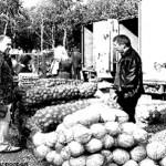 Маховик развития малого бизнеса запущен (фото)